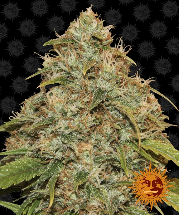 CBD Lemon Potion Auto Cannabis Seeds