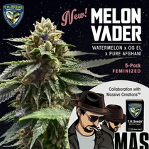 Melon Vader Feminised (Massive Creations Seeds) Cannabis Seeds
