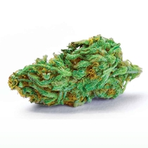 Girl Scout Cookies Auto Feminised (Discreet Seeds) Cannabis Seeds
