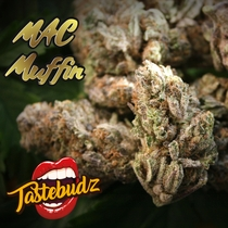 MAC Muffin Feminised (Tastebudz Seeds) Cannabis Seeds